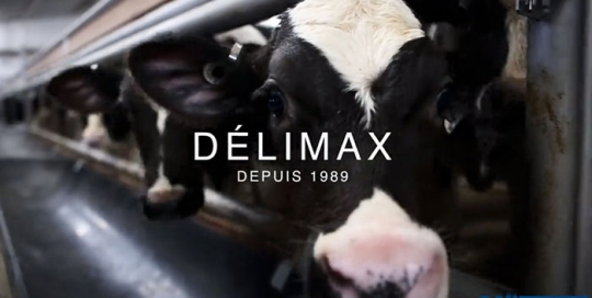 delimax-video